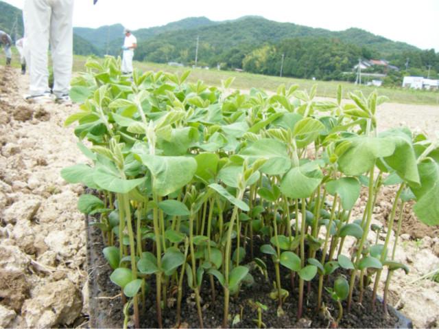 長江米エコ栽培グループ1